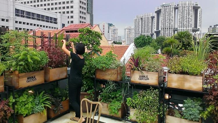 Urban Farming Yuk Biar Nggak Gampang Stress